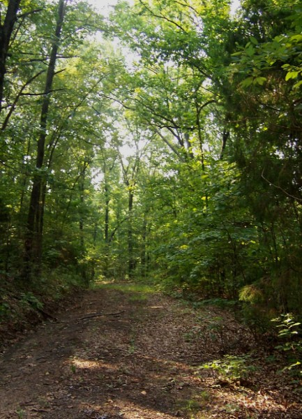 Cabin Landscape View